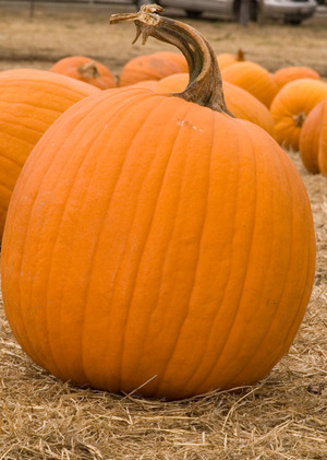 pumpkin_in_patch